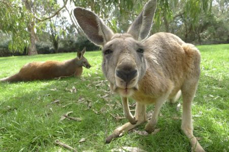 Zoo chasse tourisme